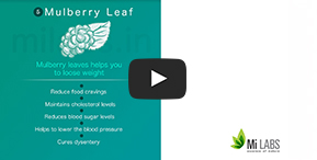 Watch, how Mulberry Leaf helps in weight loss.